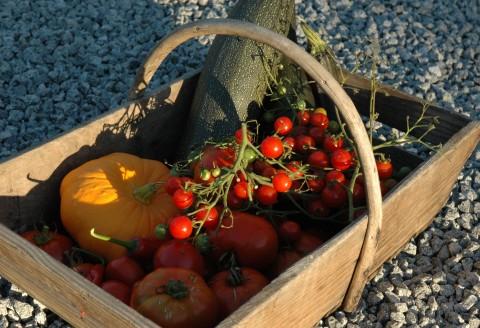 groenten uit eigen moestuin