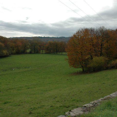 DSC_0083 herfst aangepast PIXLR
